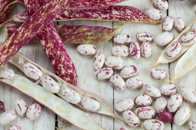 What Is the Nutrition for Cranberry Beans?