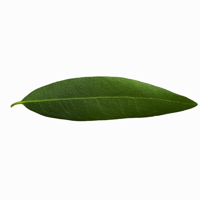 The Effects of Eating a Fresh Bay Leaf