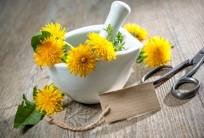 The Benefits of Dandelion Leaf & Root for the Kidneys