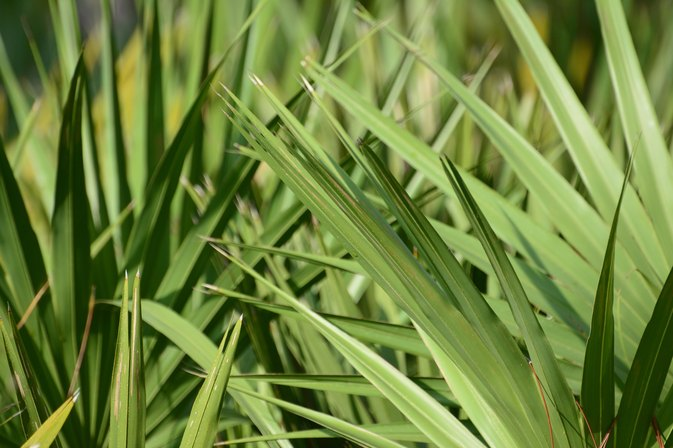 Foods That Have Saw Palmetto