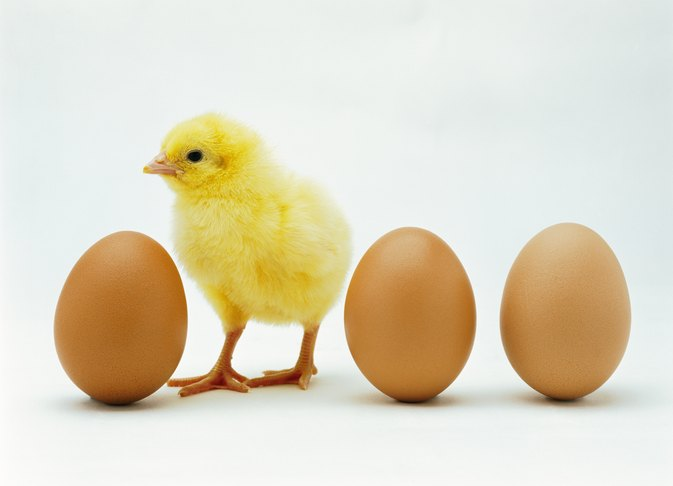 The Advantages of Brown Eggs | LIVESTRONG.COM