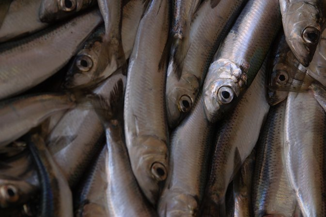 Are Anchovies Good for You?