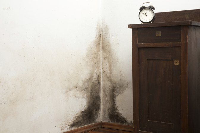 What Are the Dangers of Black Mold in Houses?