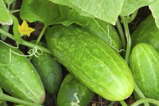 What Is the Nutritional Value of a Cucumber?