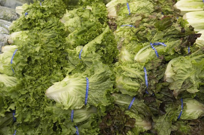 Can eating too much lettuce cause diarrhea