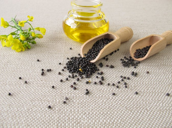 Canola Oil Health Risks