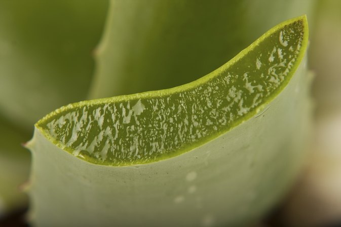 The Disadvantages of Aloe Vera