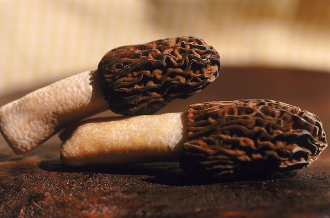Nutritional Value of Morel Mushrooms