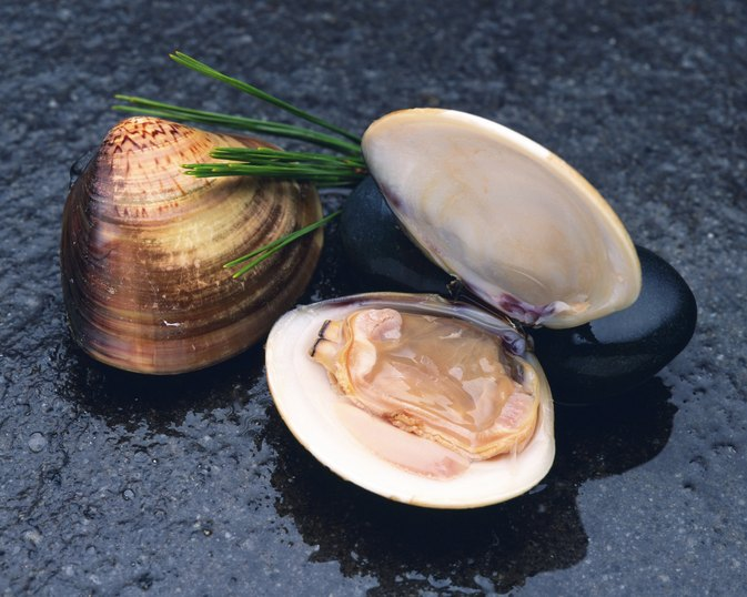 What Nutrients Do Clams Have?