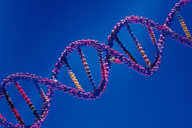 Can Certain Foods Boost Telomeres & Telomerase?