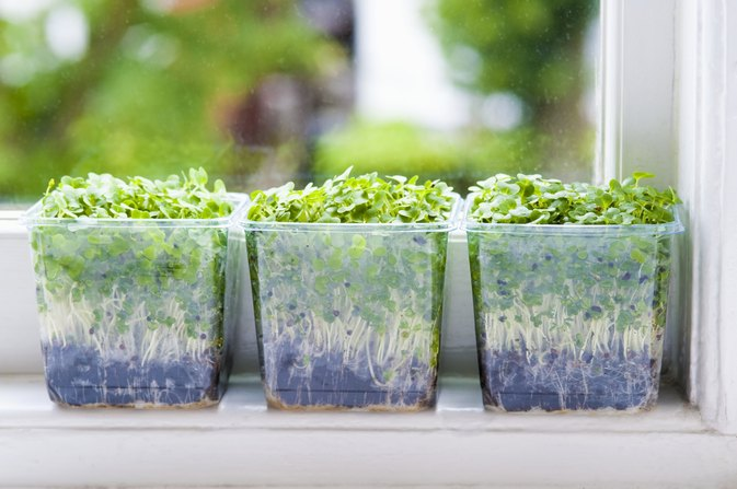 Which Plastics Are Safe to Use as Containers to Grow Food?
