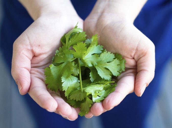 How to Cut Cilantro For Cooking