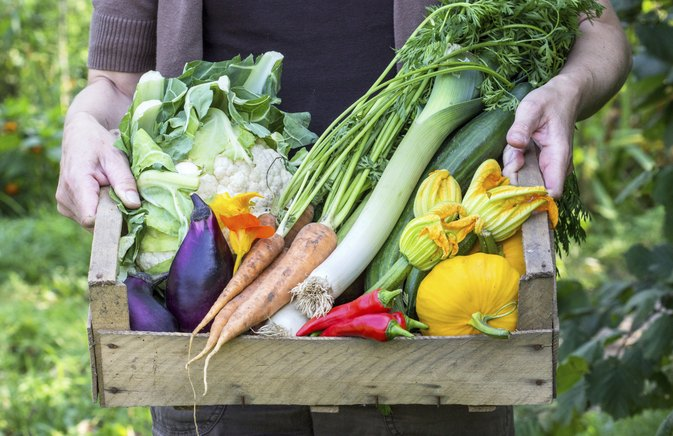 The Advantages & Disadvantages of Fresh Vegetables