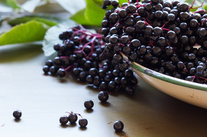 Black Elderberry Benefits