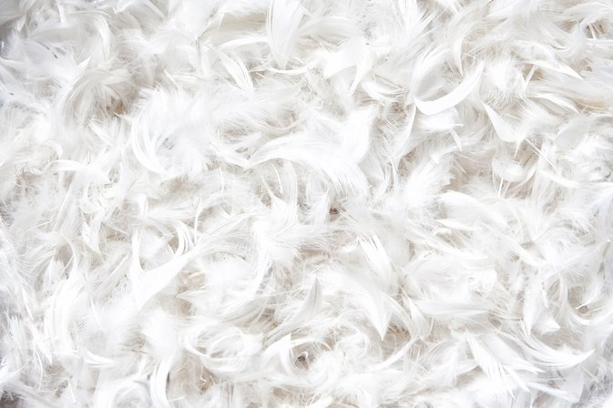 Allergies From Feather Pillows