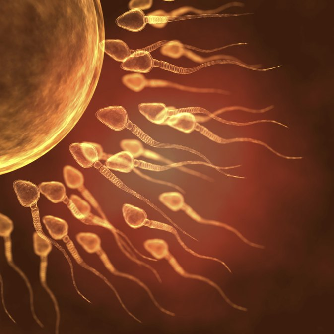 The Effects of Selenium & Zinc on Spermatogenesis