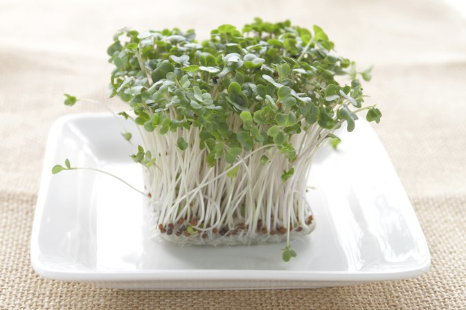 Health Benefits of Clover Sprouts