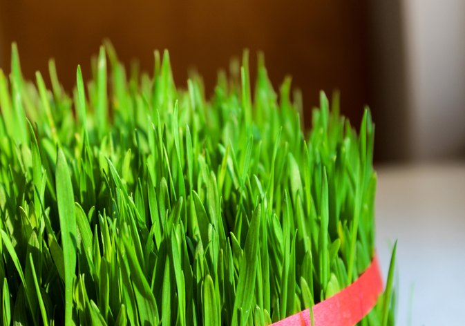 Is Wheat Grass Good for You?