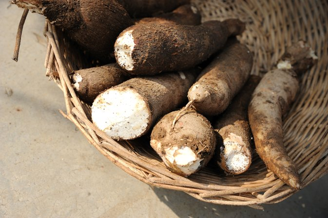 Is Cassava a Diet Alternative for Diabetics?