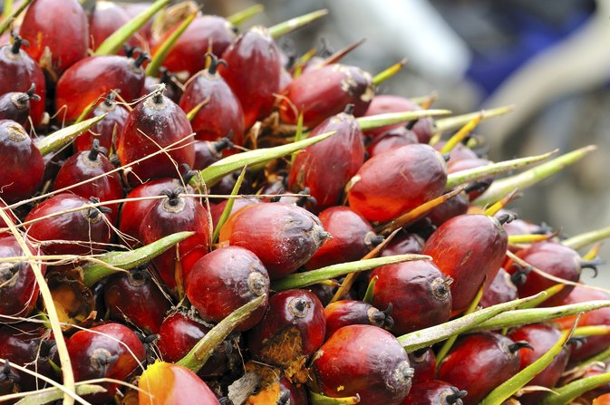 Palm Oil & Cholesterol