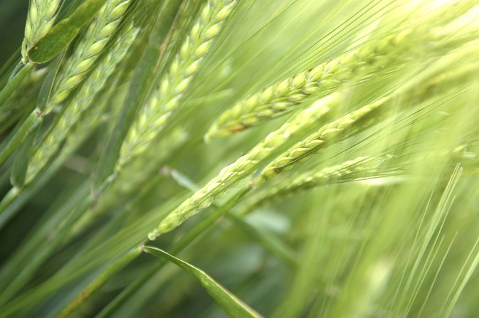 Vitamin E Content in Wheat Germ