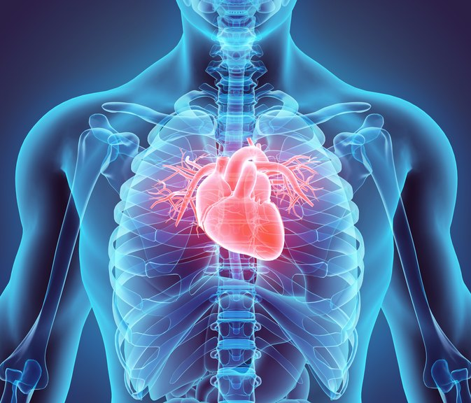 Structure & Functions of the Cardiovascular System
