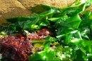Vitamins & Minerals in Seaweed