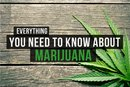 Everything You Need to Know About Marijuana