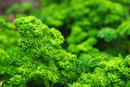 Can You Use Parsley as an Iron Supplement?