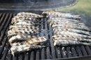 Protein in Sardines