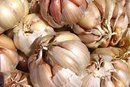 Garlic Treatment for Warts