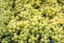Nutritional Value of Green Seedless Grapes