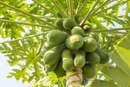 Pawpaw Tree Fruit Nutrition