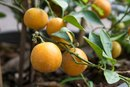 The Acid in Oranges