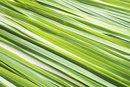 An Allergy to Lemongrass