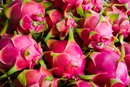 How to Choose a Dragon Fruit