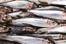 Sardines & Sodium