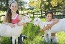 Goat's Milk Formula for Babies
