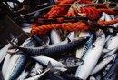 Benefits of Taking 1,000 Milligrams of Fish Oil