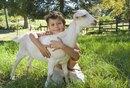 Toddler & Preschool Farm-Themed Social Studies Activities