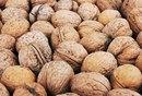 Walnuts & Protein