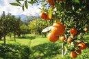 What Citrus Fruit Has the Most Vitamin C?