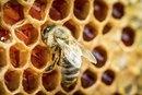 Manuka Honey & Cancer