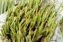 Can You Eat Raw Lemongrass?