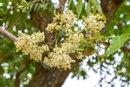 Uses of the Neem Flower