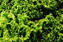 Can Dark Green Leafy Vegetables Increase Bleeding?