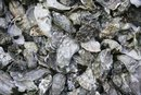 Natural Source of Calcium Carbonate