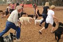 New Workout You Can Do With Your Dog