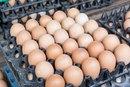 Is Vitamin K in Eggs?