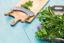 Which Herbs Reduce Uterine Fibroids?